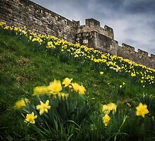 Outside York's City Walls by Nicole Petegorsky