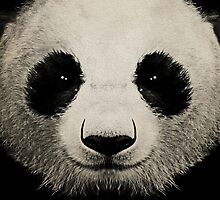 panda eyes 02 by Vin  Zzep