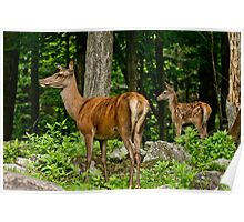 Red Deer And Fawn Poster
