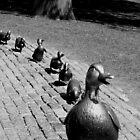 ducks in the commons by Kara Brink