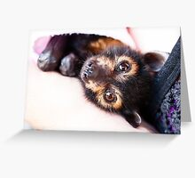 Orphan Spectacled Flying-fox Greeting Card