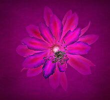 Vibrant Bloom by CarolM