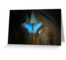 Blue Painted Lady Greeting Card