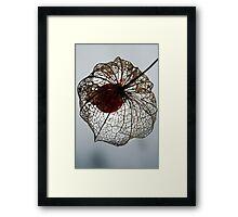 Flowerweb Framed Print