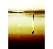 Bird On A Mooring Photographic Print