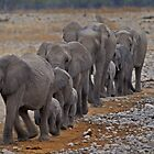 Elephant - March to the waterhole. by Peter Bland