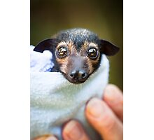 Kuro - Orphan Spectacled Flying-fox Baby Photographic Print