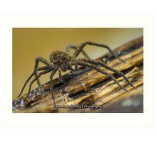 Big Wild Wolf Spider Art Print