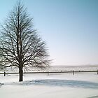 Perfect Winter Tree - Horizontal - at Farm - Feb. 2008 by Christopher Johnson