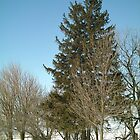 Mixed Winter Trees at Iowa Farm - Vertical View - Feb 2008 by Christopher Johnson