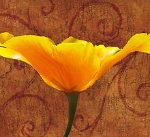 California Poppy by Leah Highland