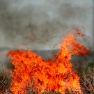 The Fiery Horse of the Apocalypse. by Chris Coetzee
