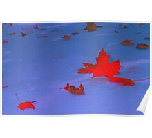 Floating Leaves Poster