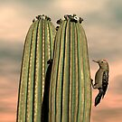 Sonoran Desert Gila Woodpecker by Walter Colvin