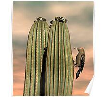 Sonoran Desert Gila Woodpecker Poster