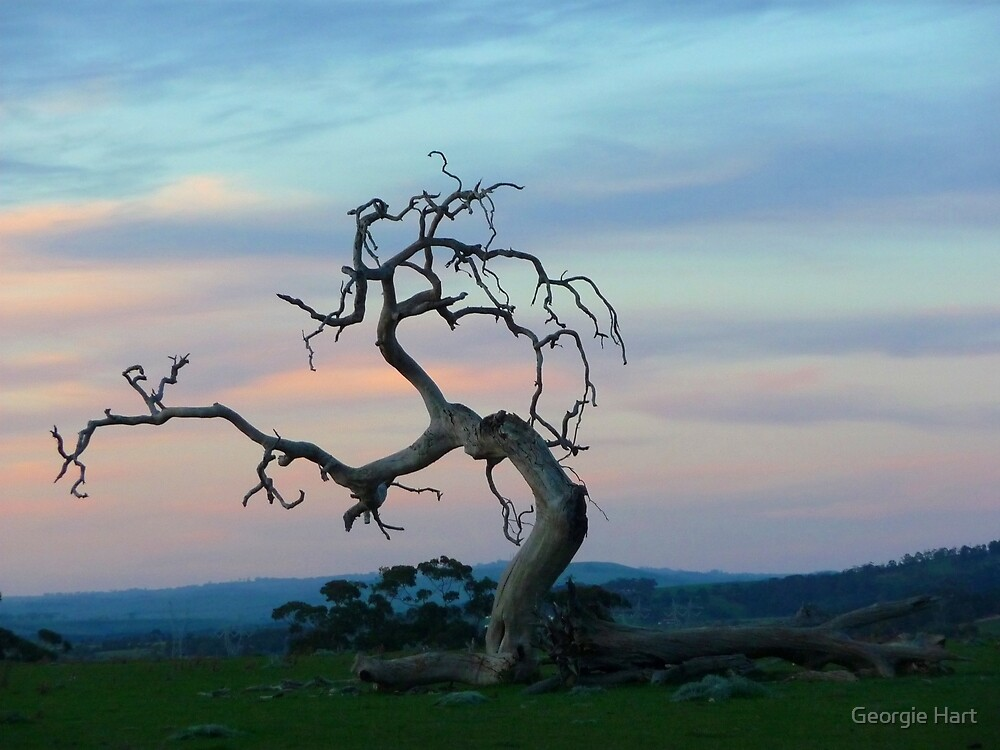 Yuroke Evening by Georgie Hart