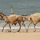 Lamu Beach Donkeys by sailgirl