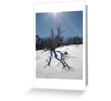 Burnt out snowgum on the Smiggins trails. Greeting Card