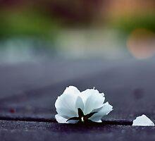 Blossom by annnna