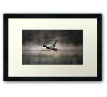 flying duck Framed Print