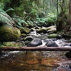 Torongo River, Noojee by Tamara Bush