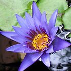 Water Lilly by Tamara Bush