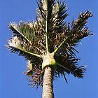 Nikau Palm by ardwork