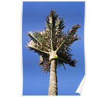 Nikau Palm Poster