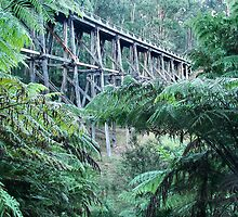Noojee Trestle Bridge by Rachael Taylor