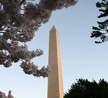 Washington Monument and Cherry Blossoms by Brad Staggs
