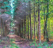 Narrow path by PeterCseke