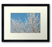 Hoarfrost on branches of a tree Framed Print