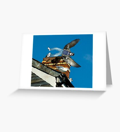 Even Fairies Can Be Cool. Greeting Card