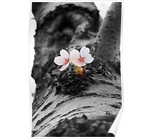Flower and Tree Poster
