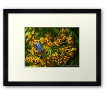 Blue Butterfly on an Orange Wildflower Framed Print