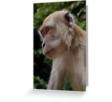 Wistful Monkey Greeting Card
