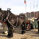 Antwerp - Transport of Grainsacks by Gilberte