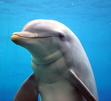 Dolphin Smile by Emilie R
