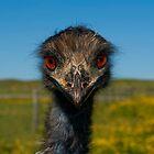 Emu Looking at Me by Gerard  Horan