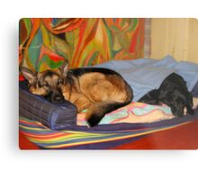 DOGS LIVING TOGETHER Metal Print