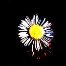 Black Daisy by Ratfingers