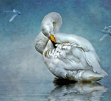 Swan Lake by Tarrby