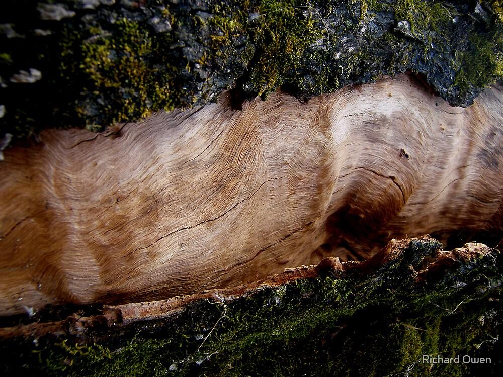 Live Bark by Richard Owen