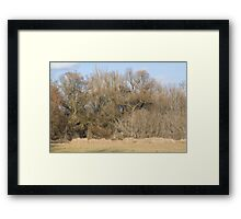 Jungle of Branches Framed Print