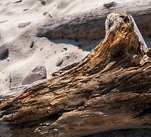 Driftwood in Sand by Image11