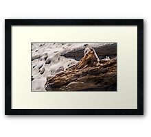 Driftwood in Sand Framed Print