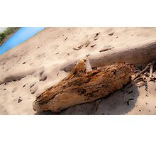 Driftwood on Beach #1 Photographic Print
