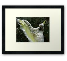 Hey Presto! Framed Print