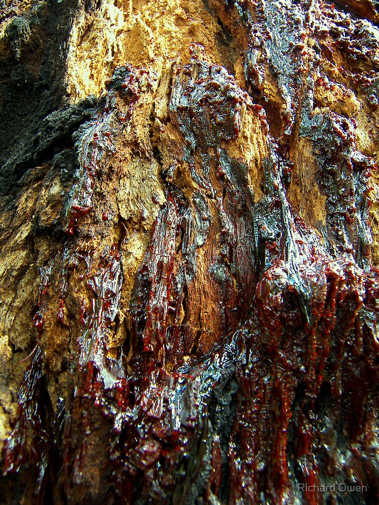 Bark Bleed by Richard Owen