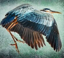 Great Blue Heron by Tarrby